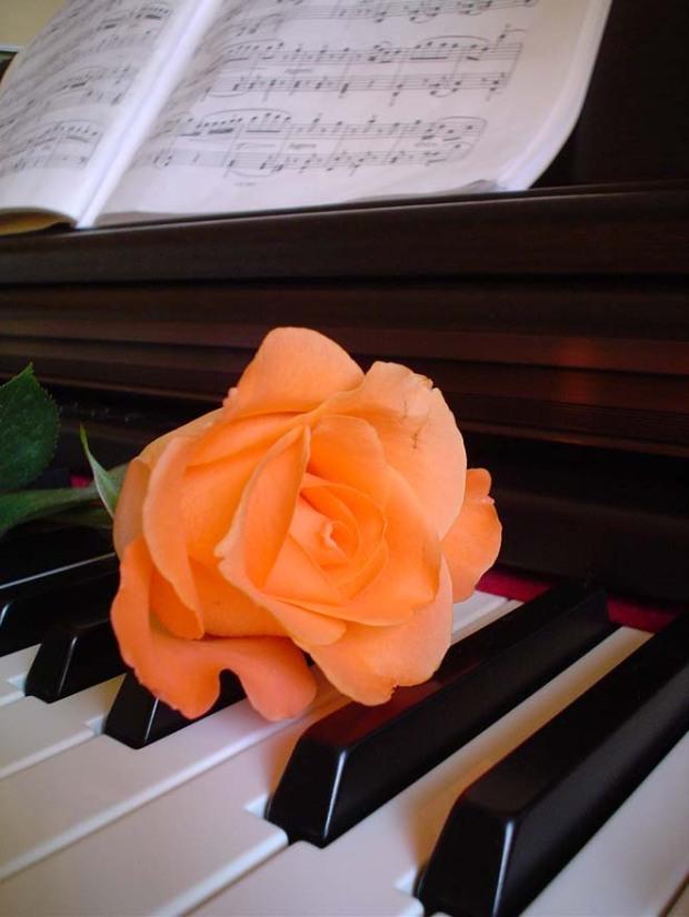 Rosa sul pianoforte